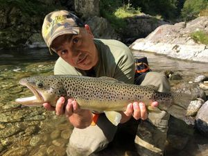 Brown Trout — Marco Iseppi