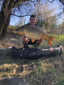 Common Carp — Pierre Cordier