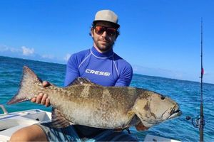 Blacksaddled Coralgrouper