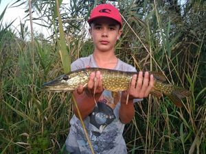 Northern Pike — Régis Foissac
