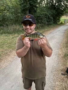 European Perch — Mat Boogaloo