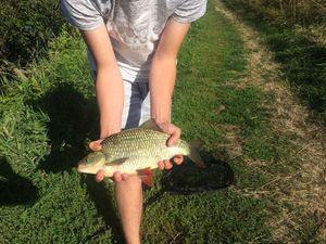 Rudd — Valentin FishingBuffs
