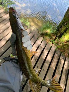 Northern Pike — Jordan Rabolt