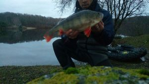 European Perch — Mitch Les Loc Eaux