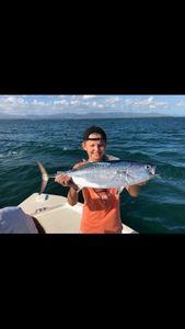 Atlantic Bonito — fishing Guadeloupe