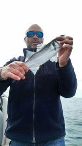 European Bass (Seabass) — cedric danet