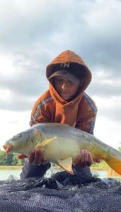 Mirror Carp — Fish tim