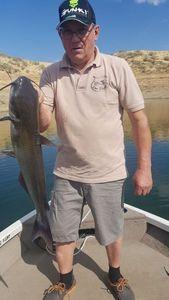 Flathead Catfish — GéGé Petit Dragon