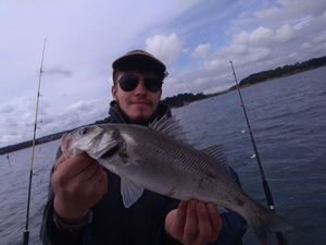 European Bass — fishiscoming fr
