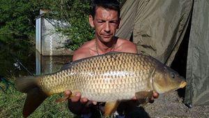 Common Carp — Richard Ringuet