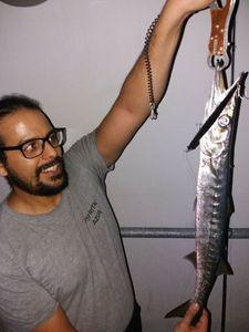 Great Barracuda — Mohamed Lahmar