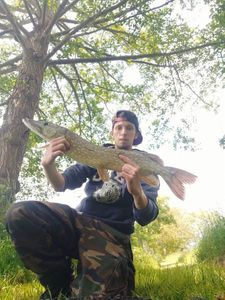 Chain Pickerel — Dimitri Noyeau