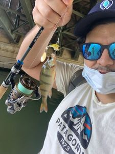 European Perch — Greg FishFriender