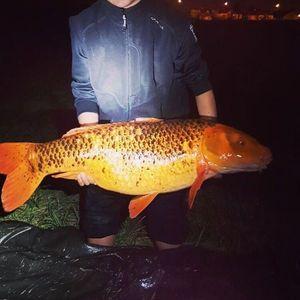 Koï Fish