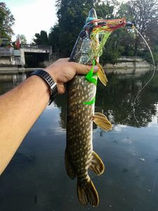 Northern Pike — Jean Boulain