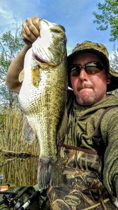 Largemouth Bass — Chad  Reznicek