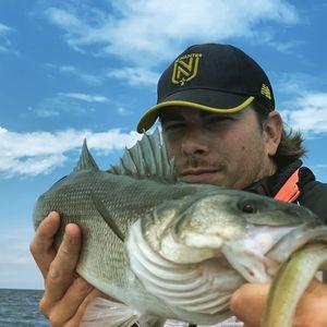 European Bass (Seabass) — Antony Shelby