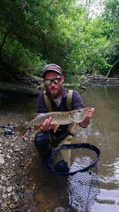 Northern Pike — Cyril Cherrier