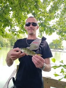 European Perch — Loïc Colin
