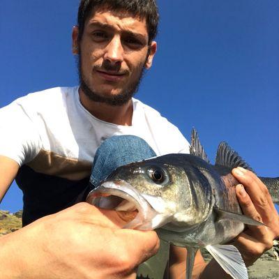 gxlabraxfishing