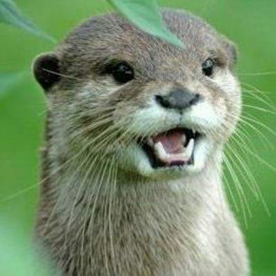 Otter Man